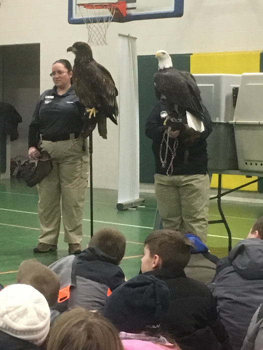 Female and male bald eagle